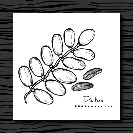 日期的水果。矢量插图。手绘绘画在白色的背景。