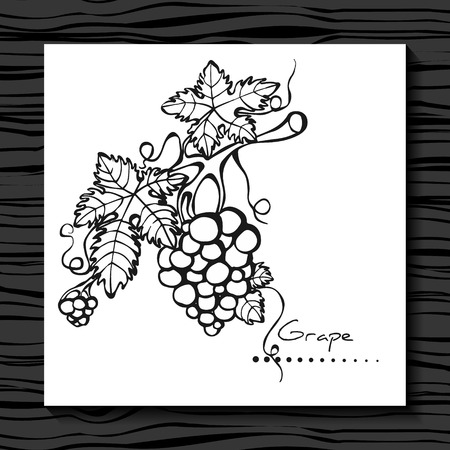 grapevine: Grape on a white background. Sketch.  Grapevine. Vector illustration.  Hand drawn. Illustration