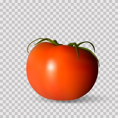 Red tomato. Whole Vegetables. Vector photorealism. Ilustração
