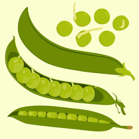 Composition of flowers and buds of peas, green peas. A set of elements.