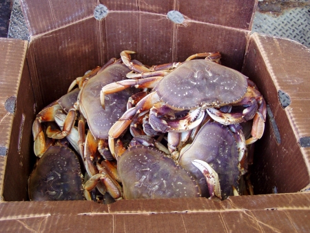 dungeness: Box of Dungeness crabs.
