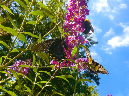 Butterfly and Bee sharing a flower in the summer sun Imagens