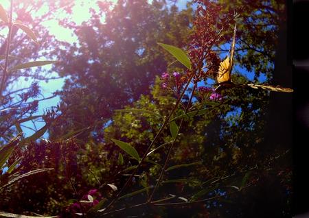 Butterfly balancing on a flower in the summer sun Reklamní fotografie