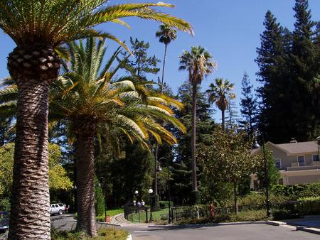 Palm trees majestically stand next to driveway Stock Photo
