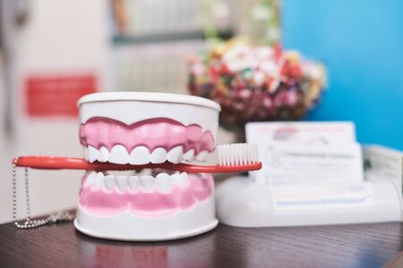 Dental jaw with snow-white teeth and a clamped toothbrush