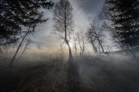carbon emission: Fire in the mixed wood forest.