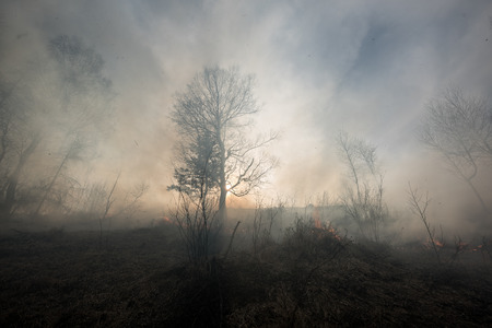 protection of land: Fire in the mixed wood forest.