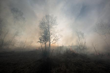 catastroph�: Incendie dans la for�t mixte. Banque d'images