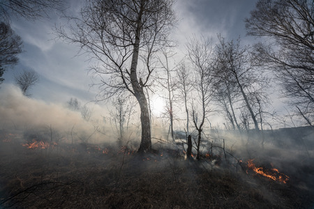 Fire in the mixed wood forest.