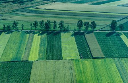 cenital: Birds Eye vista de los campos agrícolas y parcelas.