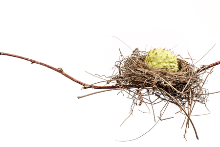bird nest: Conceptual Bird Nest.