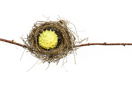 overrun: Conceptual bird nest isolated on white background. Stock Photo