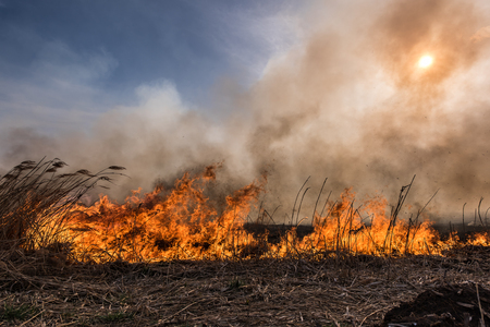 swelter: Burning dry grass and reeds at sunset.