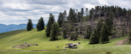 bark rain tree: Dead tress in mountain forest. Wild landscape with hut for the shepherd on the hill. Stock Photo