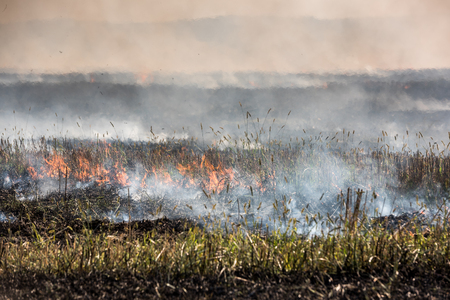 air dried: Burning straw stubble field, Which is a dangerous global warming. Smoke pollution. Stock Photo