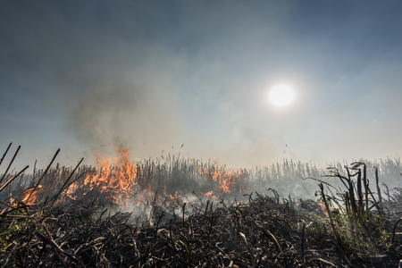 Burning straw stubble field, Which is a dangerous global warming. Smoke pollution. Stock Photo