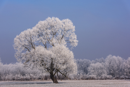 Beautiful late autumn meadow landscape with trees covered in Hoarfrost.