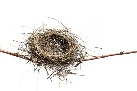 Lonely bird nest on the branch, isolated on white background.