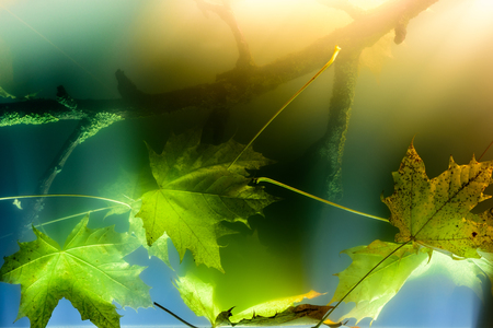 Underwater landscape, detail at the bottom of the lake. Underwater Scenery with Branch and Leaves. Stock fotó