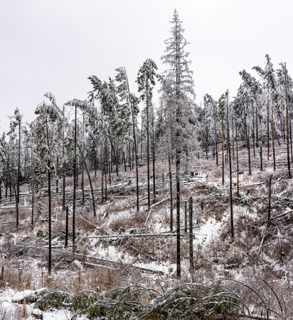 Forest disaster. Storm damage in the forest - natural disaster. Stock fotó