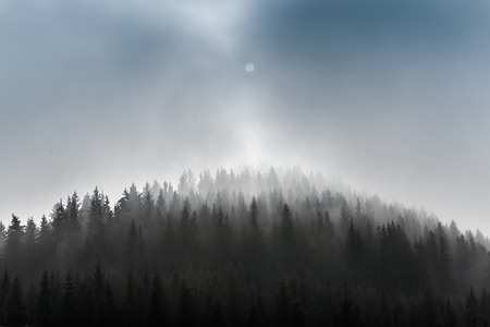 Pine Forests. Misty morning view in the wet mountain area. Stock fotó