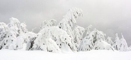 Peak of the Mountain. Peak of the mountain with trees.