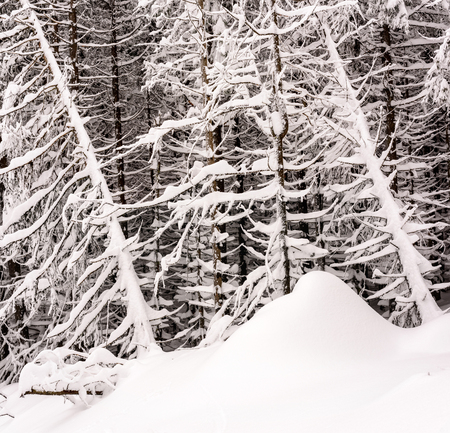 The winter forest with lots of snow. Detail of forest.