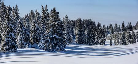 Panoramic Landscape. Winter landscape with long shadows. Stock fotó