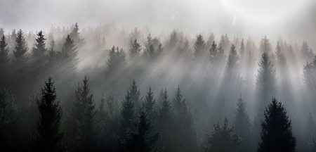 Fog split by sun rays. Misty morning view in the wet mountain area.