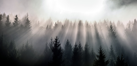 Fog split by sun rays. Misty morning view in the wet mountain area. Stock fotó - 112601669