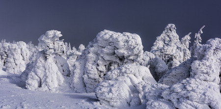 Winter landscape with snow covered firs and dark clouds in the background at sunset. Snow sculptures, Ice Frost and Rime. Natural Phenomen.