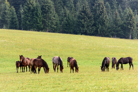 Horses is a free pasture in the Carpathian mountains of Transylvania. Horses in free range. Stock fotó - 126296961