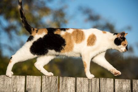 Cat walking on a wooden fence in the village, blurred background. Stock Photo