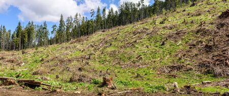 Deforestation, forest clearing.