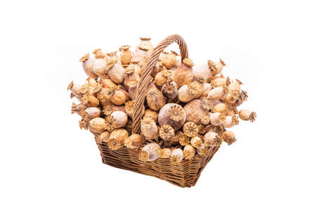A bunch of dried poppy flower seed pods in a wicker basket isolated on white background.