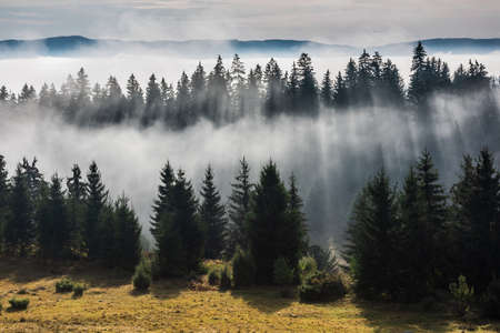 Forest in the morning fog. Fog divided by sun rays. Misty morning view in wet mountain area.