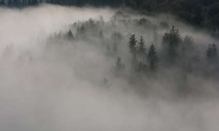 Fog above pine forest. Misty morning view in wet mountain area. Stock Photo