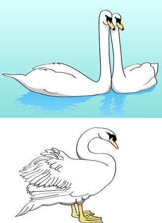 Two swans on lake, lonely swan Stock Vector - 13282867