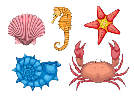 sea horse: Vector set of sea animals   Illustration of animals from the beach of the exotic sea