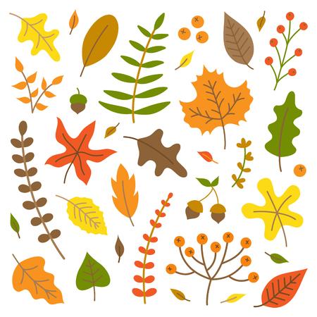 Conjunto de ilustración de vector de coloridas hojas de otoño. Otoño colección de naturaleza, hojas y plantas, aislado.