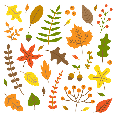 Kleurrijke herfstbladeren vector illustratie set. Herfst natuur, bladeren en planten collectie, geïsoleerd.