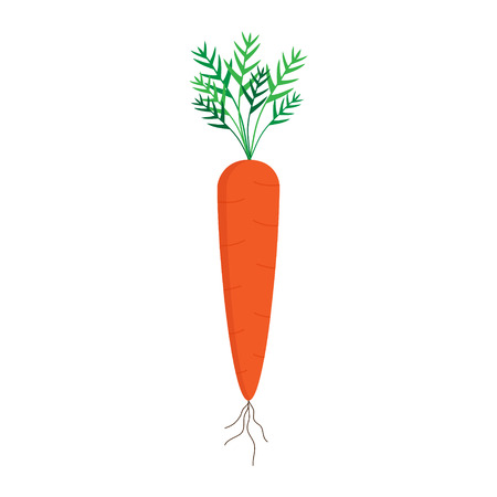 Carrot vector graphic illustration, isolated on white background. Sweet orange carrot vegetable with green leaves and brown roots.