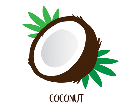 Coconut vector illustration, drawing, coconut cut in half with green palm leaves.
