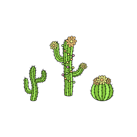 Hand drawn cactus collection. Cute outlined vector illustrations of cactus plants with flowers and decorations. Isolated.