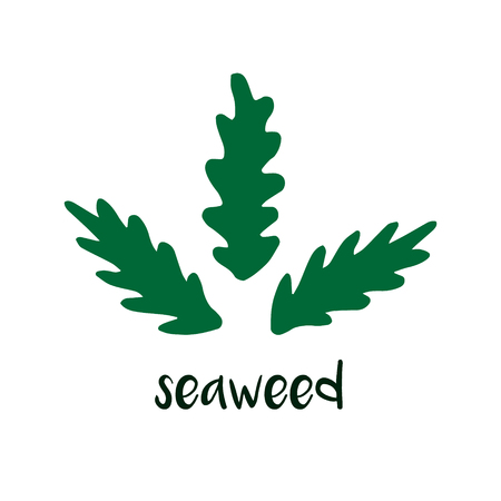 Seaweed vector doodle drawing with writing. Sea algae isolated on white background.