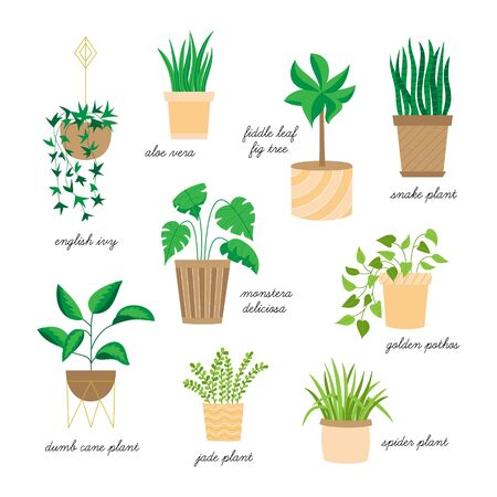 Vector Illustration Keywords: Hand drawn indoor plants. Isolated.