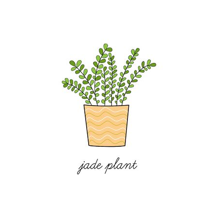 Jade plant, vector illustration. Hand Drawn Cute Outlined Indoor Plant in Pot. Isolated.