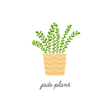 Jade plant, vector illustration. Hand drawn cute indoor plant in pot. Isolated.