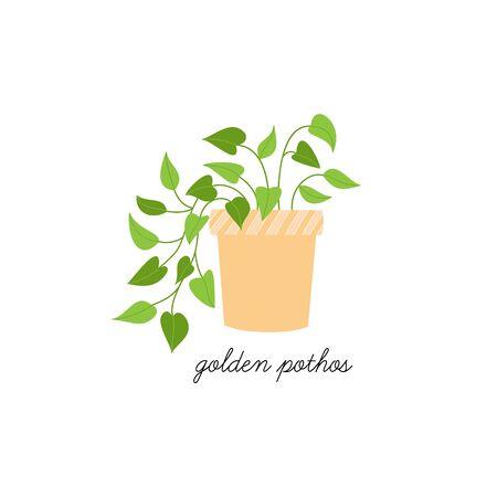 Vector Illustration Keywords: Hand drawn cute golden pothos plant in pot. Isolated. Vektorové ilustrace