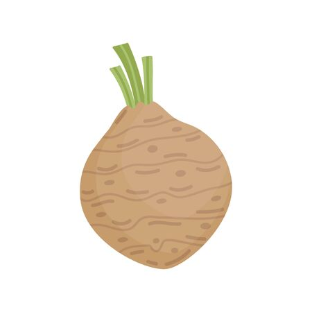 Celery root vector illustration icon. Celeriac vegetable. Isolated.